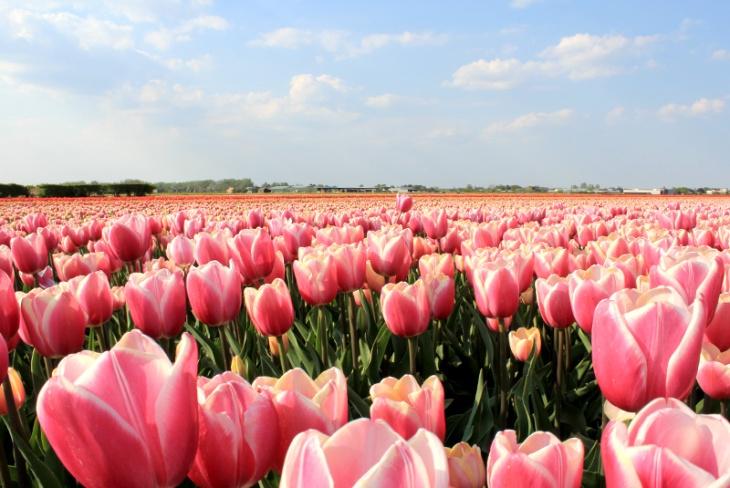 ATLS_bloemen_02